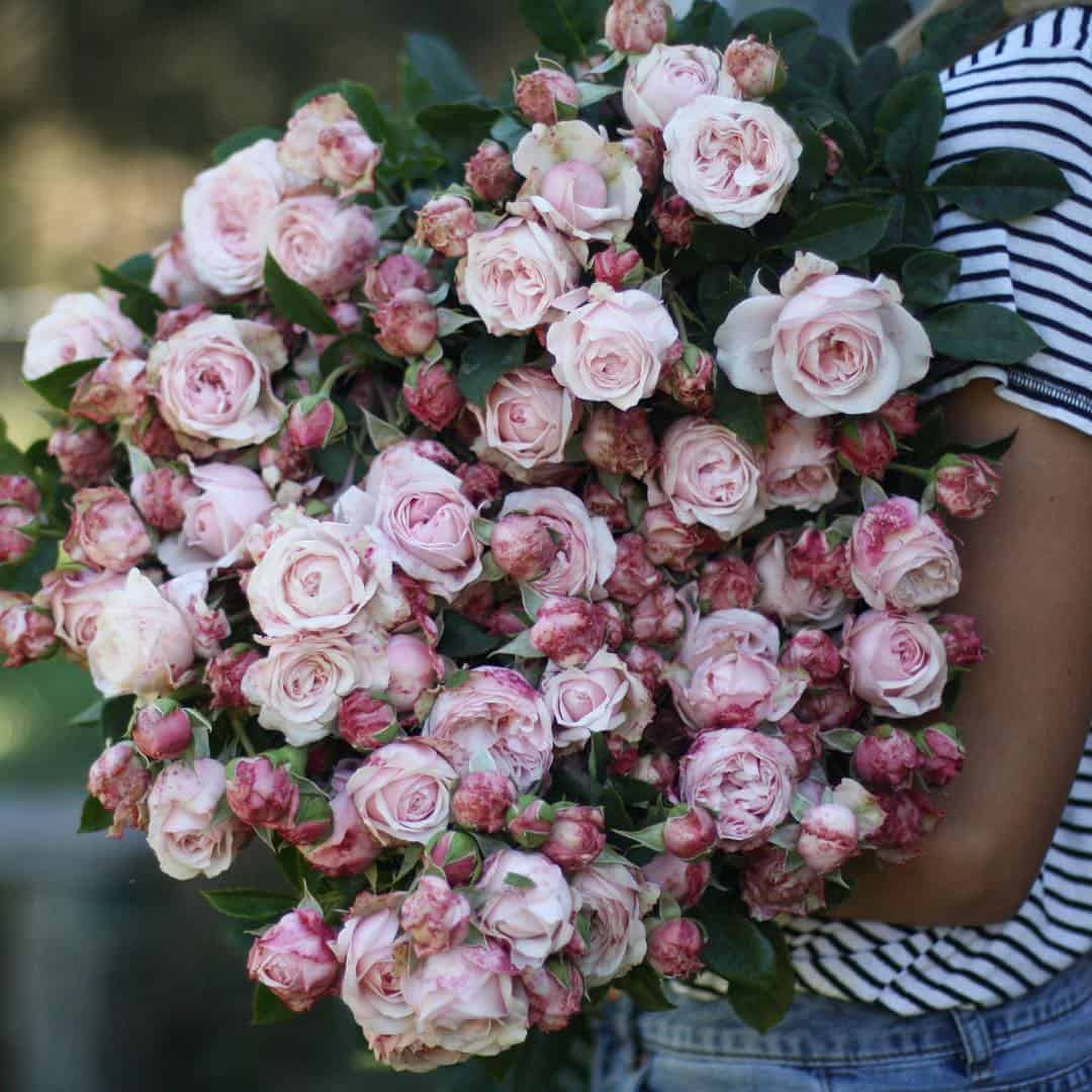 huge bunch of pink roses
