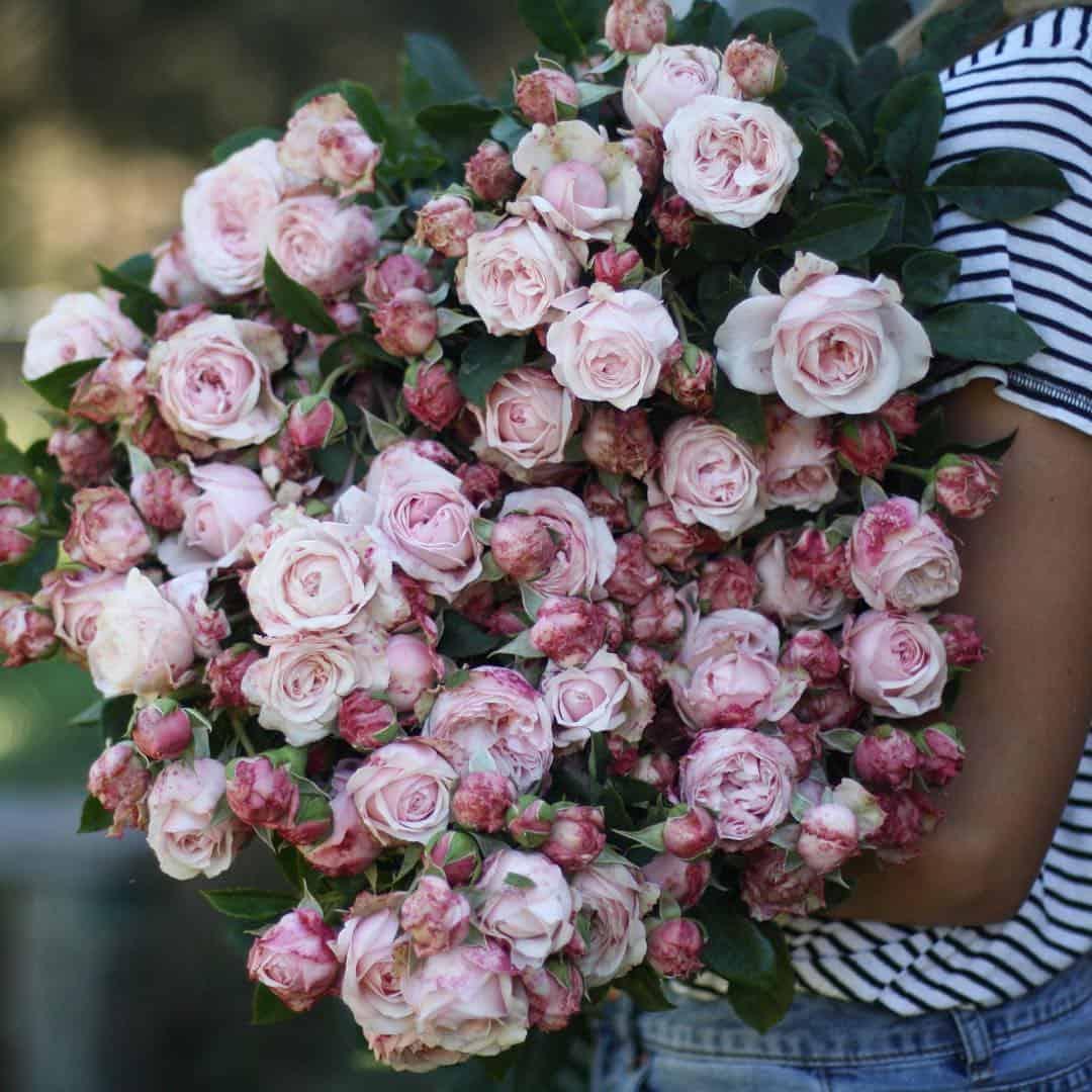 huge bunch of pink roses