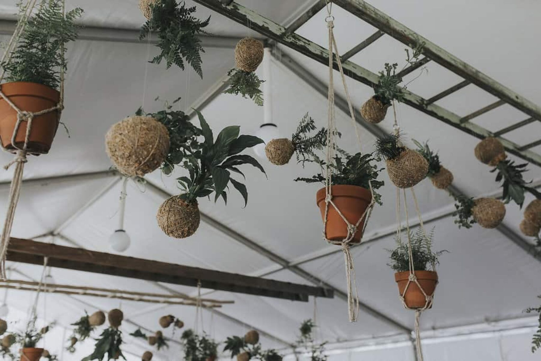 marquee wedding with hanging plants and kokedamas