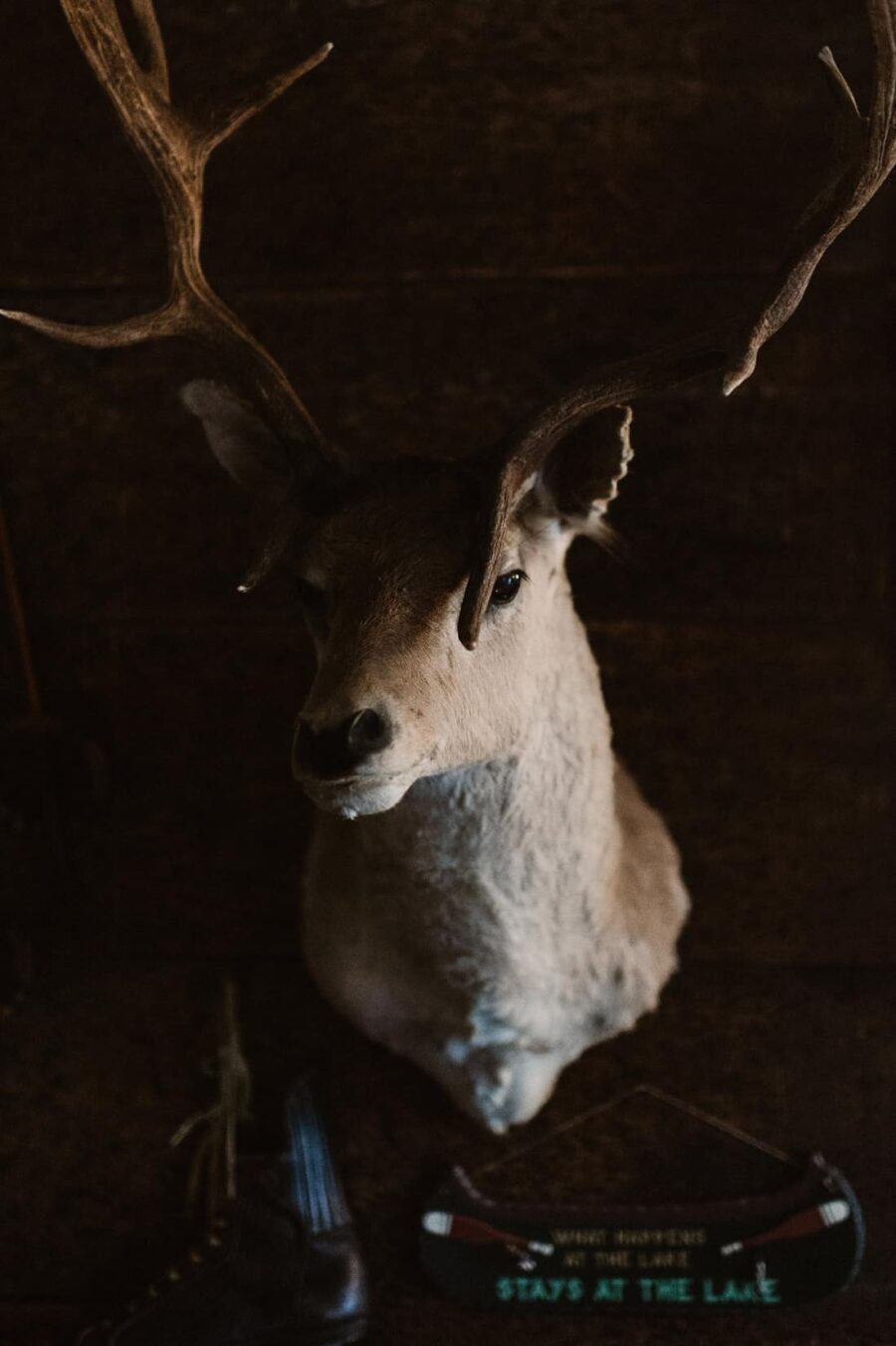 vintage taxidermy stag head